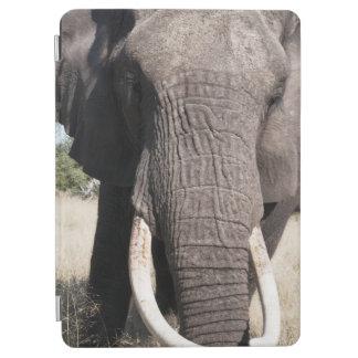 Elephant (Loxodonta africana), Abu Camp 3 iPad Air Cover