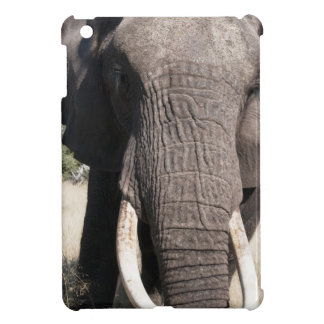Elephant (Loxodonta africana), Abu Camp 3 iPad Mini Covers