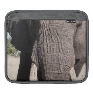 Elephant (Loxodonta africana), Abu Camp 3 iPad Sleeve