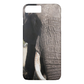 Elephant (Loxodonta africana), Abu Camp 3 iPhone 8 Plus/7 Plus Case