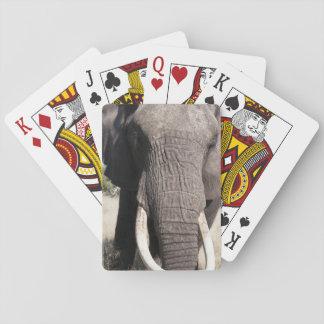 Elephant (Loxodonta africana), Abu Camp 3 Playing Cards