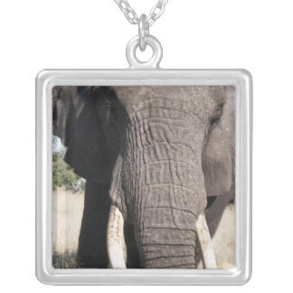 Elephant (Loxodonta africana), Abu Camp 3 Silver Plated Necklace