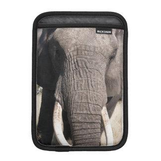 Elephant (Loxodonta africana), Abu Camp 3 Sleeve For iPad Mini