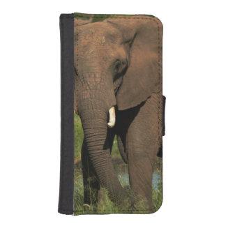 Elephant (Loxodonta Africana), Hwange National