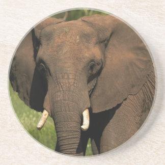 Elephant (Loxodonta Africana), Hwange National Coaster