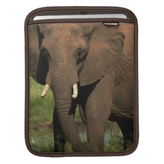 Elephant (Loxodonta Africana), Hwange National iPad Sleeve