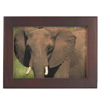 Elephant (Loxodonta Africana), Hwange National Keepsake Box