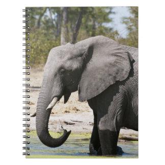 Elephant (Loxodonta africana), Savute Channel Notebooks