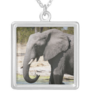 Elephant (Loxodonta africana), Savute Channel Silver Plated Necklace