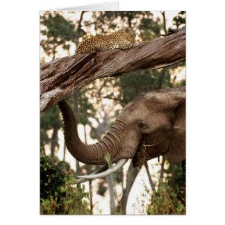 Elephant (Loxodonta) Testing Scent Of Leopard Card