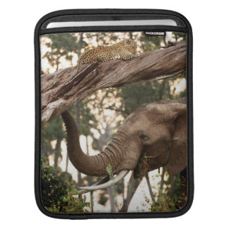 Elephant (Loxodonta) Testing Scent Of Leopard iPad Sleeve