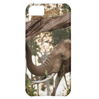 Elephant (Loxodonta) Testing Scent Of Leopard iPhone 5C Case