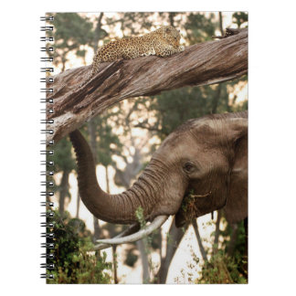 Elephant (Loxodonta) Testing Scent Of Leopard Notebooks