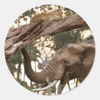 Elephant (Loxodonta) Testing Scent Of Leopard Round Sticker