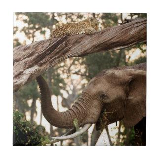 Elephant (Loxodonta) Testing Scent Of Leopard Tile
