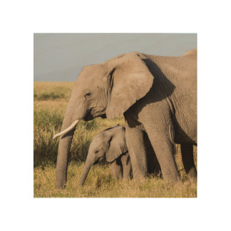 Elephant Mother and Her Baby Wood Canvases