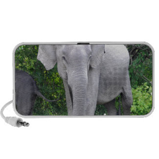 elephant moving to goal and success travel speaker