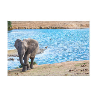Elephant on the lake canvas print