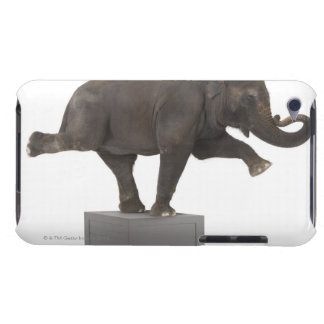 Elephant performing trick on box barely there iPod covers