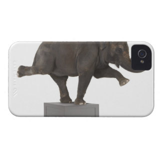 Elephant performing trick on box iPhone 4 Case-Mate case