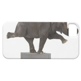 Elephant performing trick on box iPhone 5 case