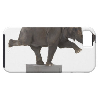 Elephant performing trick on box iPhone 5 covers