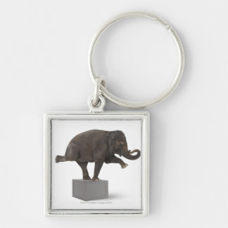 Elephant performing trick on box key ring