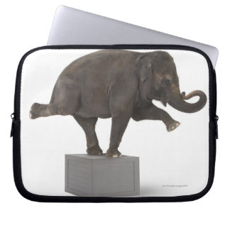 Elephant performing trick on box laptop sleeve