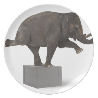 Elephant performing trick on box plate