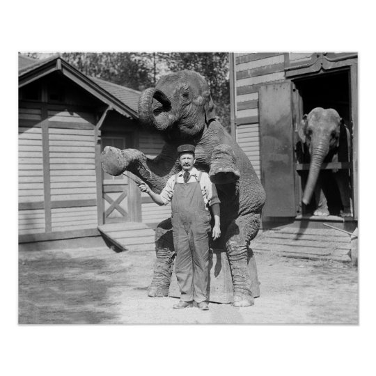 Elephant Performs a Trick, 1915. Vintage Photo Poster