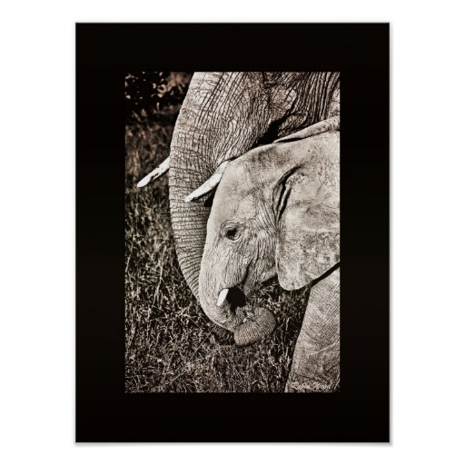 Elephant photo African art PORTFOLIO size Poster