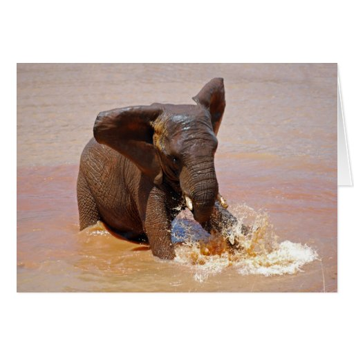 Elephant playing with water cards