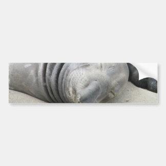 Elephant Seal Bumper Sticker
