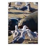 Elephant Seal Cards