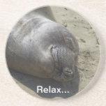 Elephant Seal Coaster