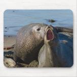 Elephant Seal Matting Mousepad