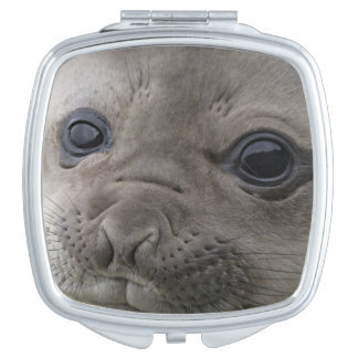 Elephant seal Mirounga leonina) cub in the Mirrors For Makeup