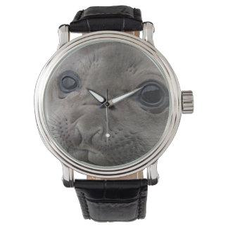 Elephant seal Mirounga leonina) cub in the Wristwatches