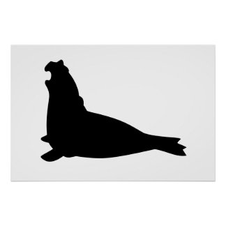 Elephant Seal Poster Black