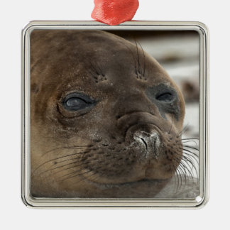 Elephant Seal pup Silver-Colored Square Decoration