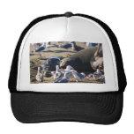 Elephant Seal Trucker Hats