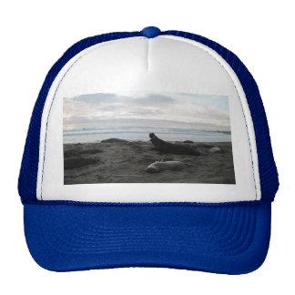 Elephant Seals at Piedras Blancos Beach Trucker Hats