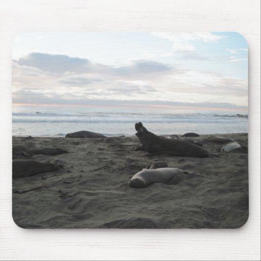 Elephant Seals at Piedras Blancos Beach Mouse Pad