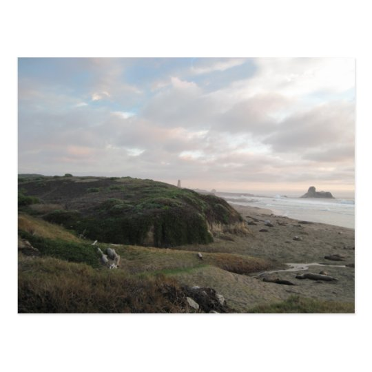 Elephant Seals at Piedras Blancos Beach Postcard