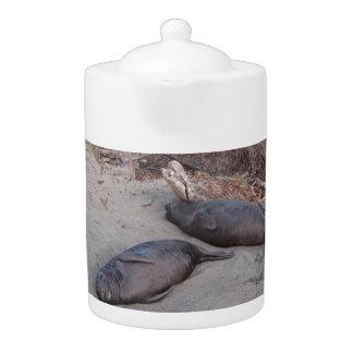 Elephant Seals at Piedras Blancos Beach