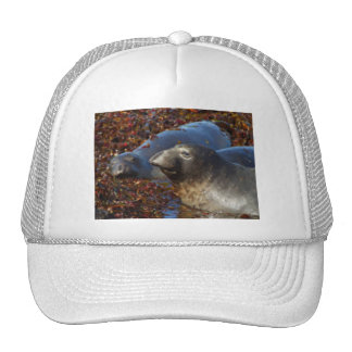 Elephant Seals Big Sur California Painted Cap