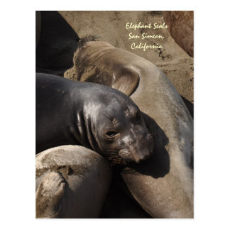 Elephant Seals, San Simeon, California Postcard