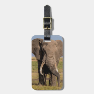 Elephant Searching the Ground Luggage Tag