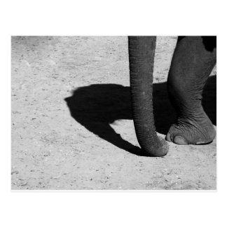 Elephant shadow postcard