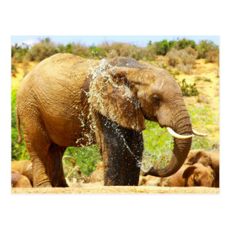 elephant spraying postcard